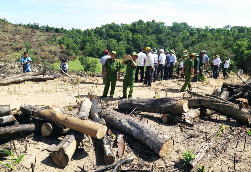 Khởi tố vụ án phá trắng 21 ha rừng phòng hộ ở Bình Định - ảnh 2