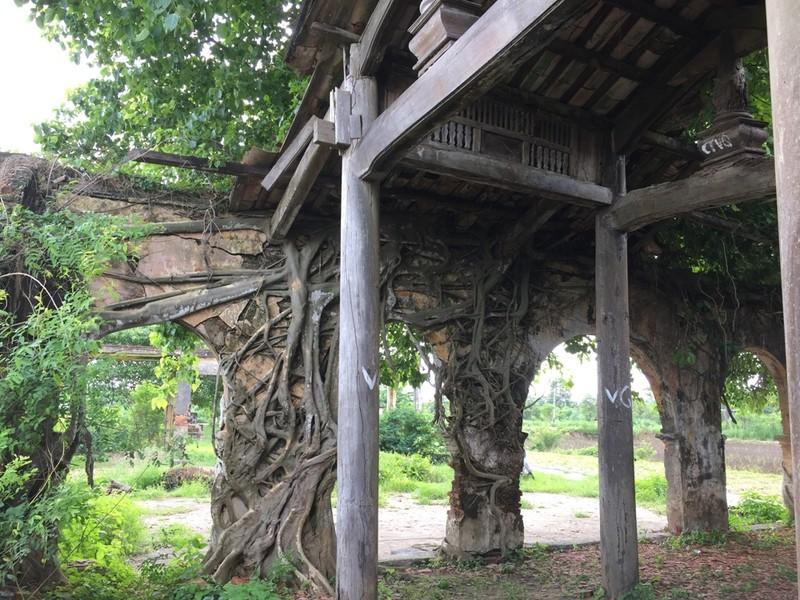 Người dân muốn giữ ngôi đình nằm trọn trong bộ rễ bồ đề - ảnh 7