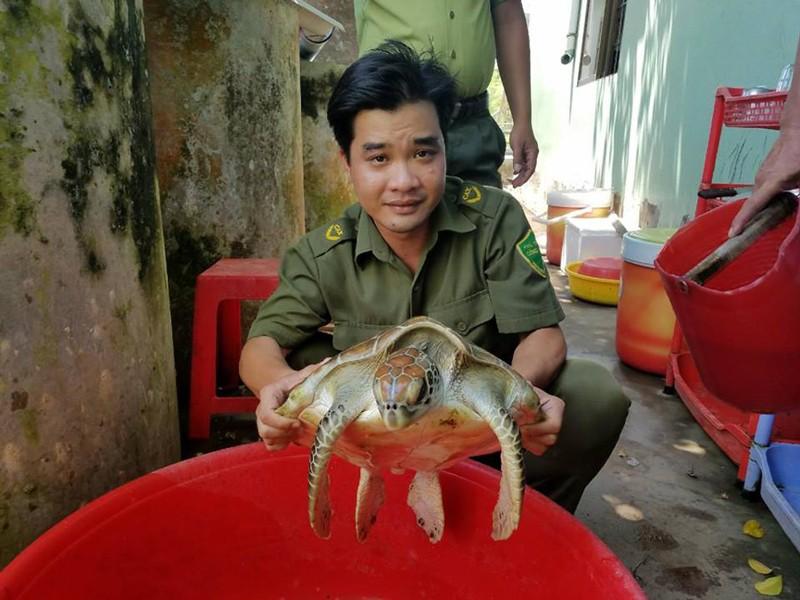 Bến Tre 'giải cứu' và thả con vích 7,5 kg về biển - ảnh 3