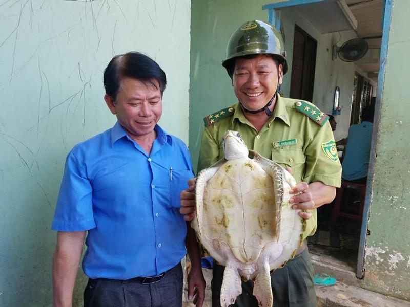 Bến Tre 'giải cứu' và thả con vích 7,5 kg về biển - ảnh 1