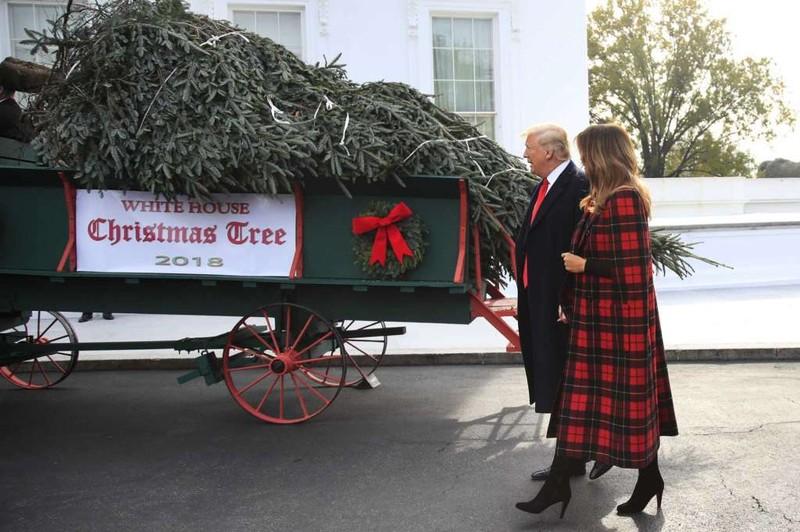 Lần đầu tiên ông Trump đón cây thông Giáng sinh cùng phu nhân - ảnh 1