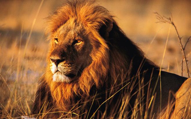 Sư tử xổng chuồng, vồ chết nữ thực tập sinh - ảnh 1