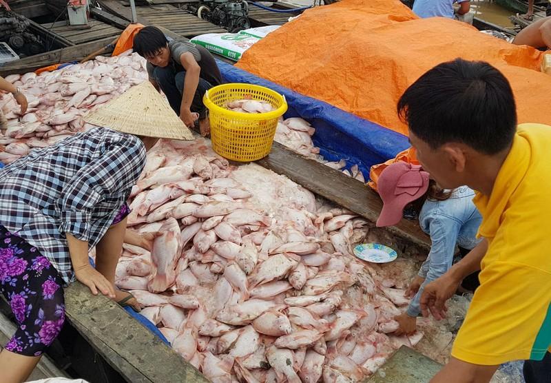 Hàng trăm tấn cá chết ở làng bè lớn nhất Đồng Nai - ảnh 1