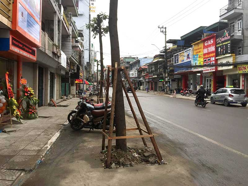Thực hư chuyện trồng cây dưới lòng đường ở Uông Bí - ảnh 1