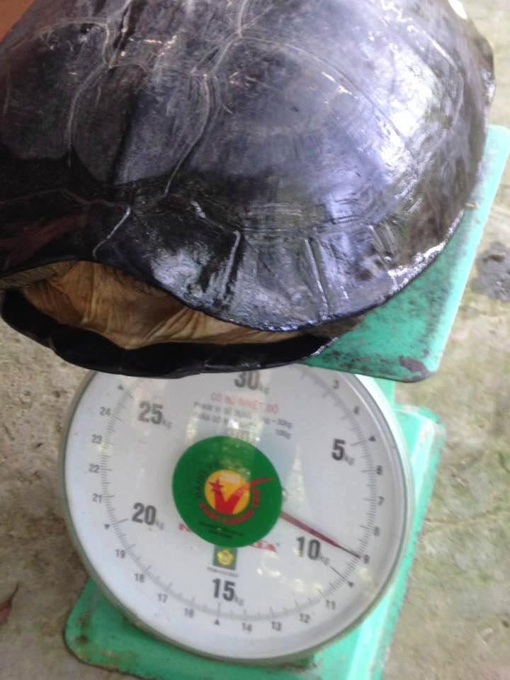 Mua rùa 9 kg có khắc chữ trên lưng để phóng sinh - ảnh 1
