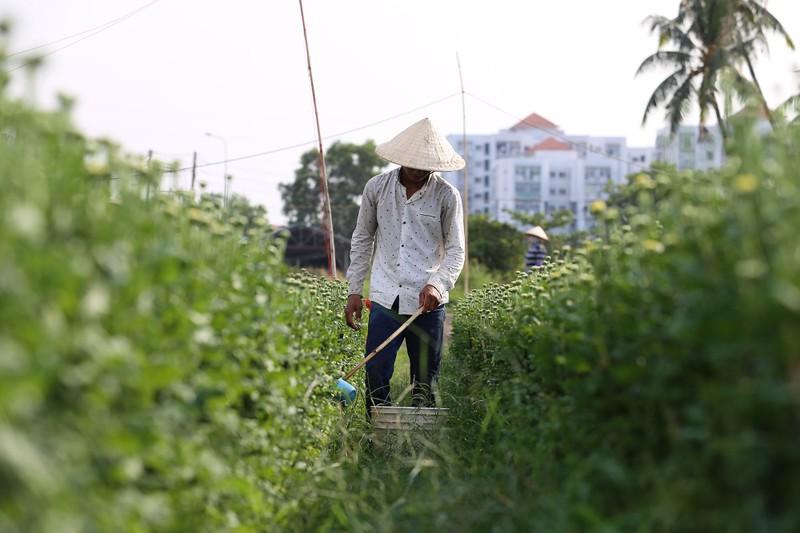 Làng hoa ven Sài Gòn hối hả đón Tết Kỷ Hợi - ảnh 3