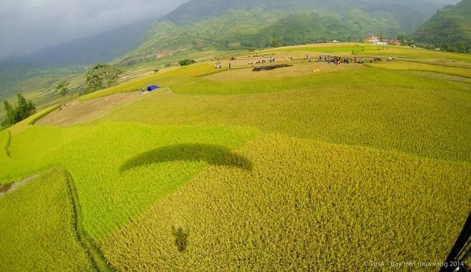 Vẻ đẹp mùa vàng Mù Cang Chải từ dù lượn - ảnh 9