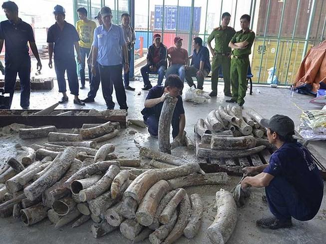 Tạm đình chỉ 4 vụ buôn lậu ngà voi vì hết hạn điều tra - ảnh 1