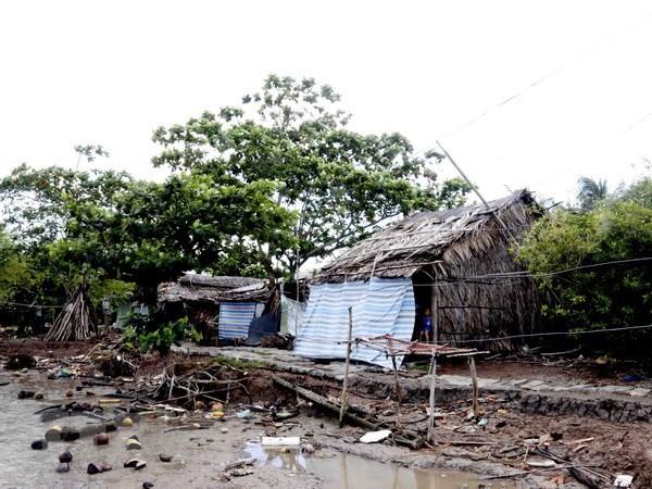 Cà Mau: Bờ biển Tây sạt lở rất nghiêm trọng - ảnh 1