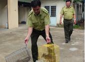 Buôn bán động vật hoang dã quý hiếm giữa phố