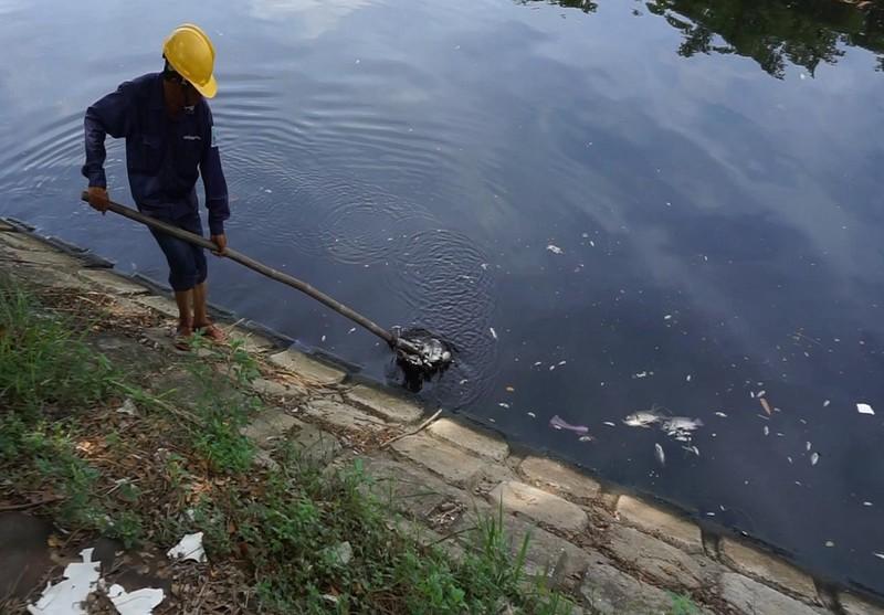 Từ sáng nay cá chết trắng kênh Phú Lộc, Đà Nẵng - ảnh 2