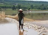 Người dân Bình Phước sửng sốt vì cá chết trắng mặt nước