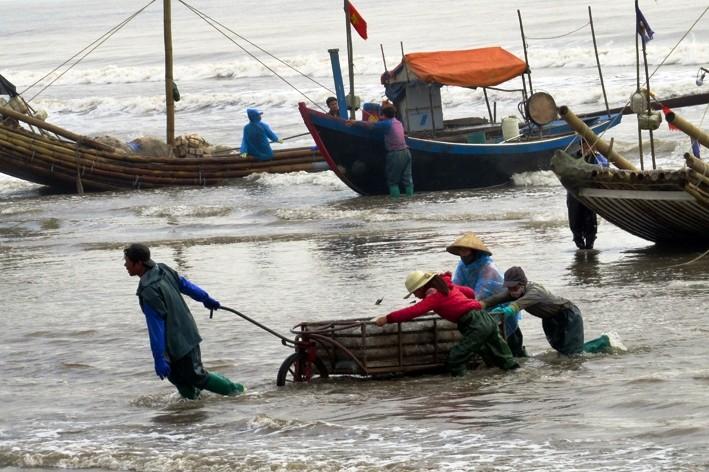 Ngư dân trúng đậm mùa sứa   - ảnh 2
