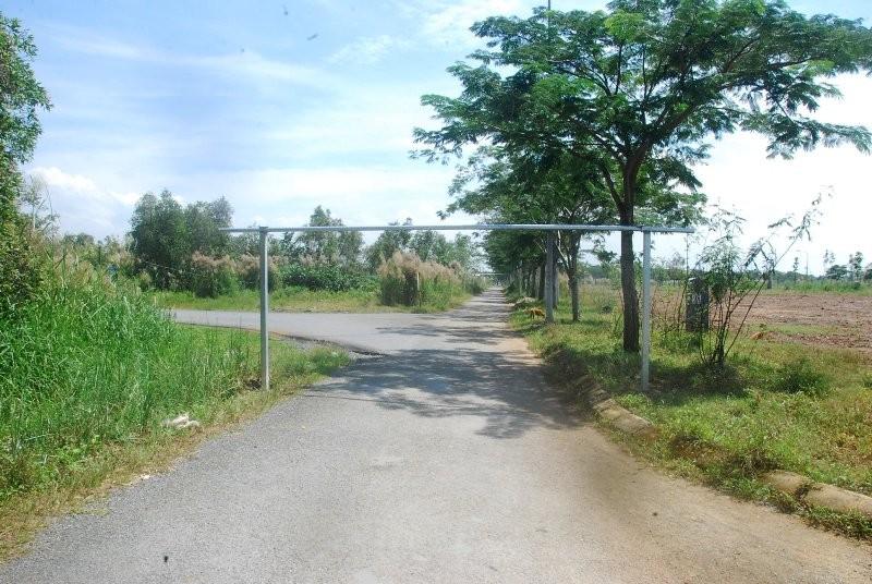 Khu đô thị lớn nhất quận 9 làm nơi chăn bò - ảnh 3