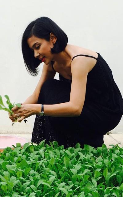 Biệt thự nhà vườn ngập hoa quả của diễn viên Việt Trinh - ảnh 12