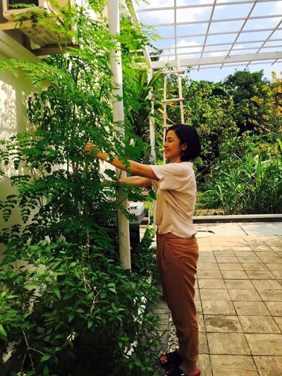 Biệt thự nhà vườn ngập hoa quả của diễn viên Việt Trinh - ảnh 15