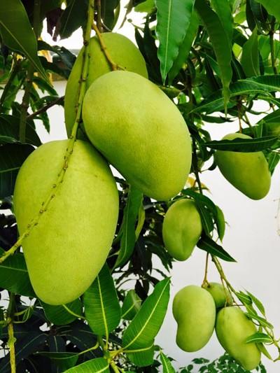 Biệt thự nhà vườn ngập hoa quả của diễn viên Việt Trinh - ảnh 17
