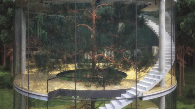 Nhà 4 tầng trong suốt nằm giữa rừng - ảnh 4