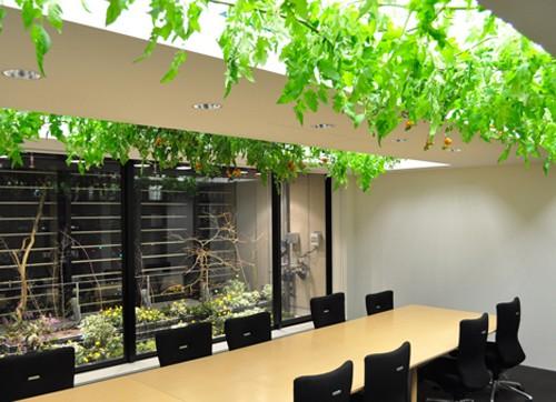 Nhật Bản thiết kế ruộng lúa ngay trong tòa nhà 9 tầng - ảnh 10