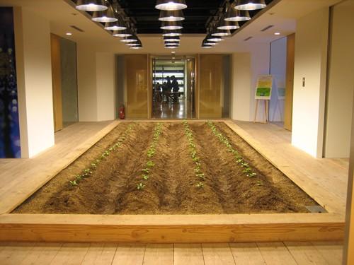 Nhật Bản thiết kế ruộng lúa ngay trong tòa nhà 9 tầng - ảnh 14