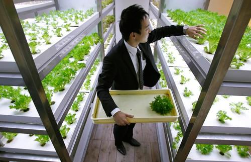 Nhật Bản thiết kế ruộng lúa ngay trong tòa nhà 9 tầng - ảnh 17