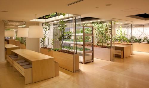 Nhật Bản thiết kế ruộng lúa ngay trong tòa nhà 9 tầng - ảnh 23