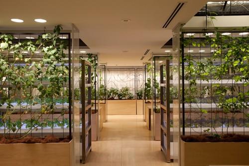 Nhật Bản thiết kế ruộng lúa ngay trong tòa nhà 9 tầng - ảnh 24