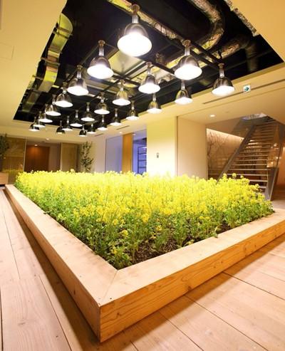 Nhật Bản thiết kế ruộng lúa ngay trong tòa nhà 9 tầng - ảnh 25