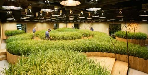 Nhật Bản thiết kế ruộng lúa ngay trong tòa nhà 9 tầng - ảnh 4