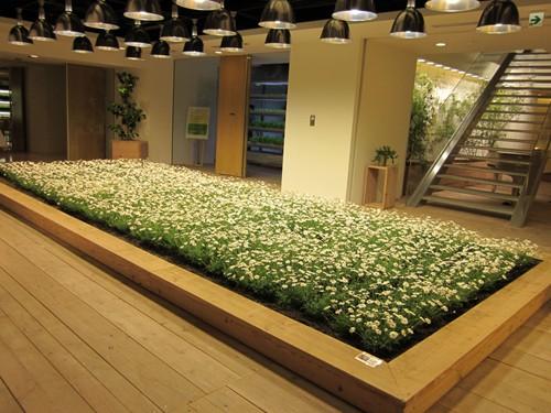 Nhật Bản thiết kế ruộng lúa ngay trong tòa nhà 9 tầng - ảnh 8