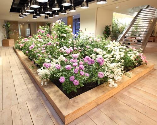 Nhật Bản thiết kế ruộng lúa ngay trong tòa nhà 9 tầng - ảnh 9