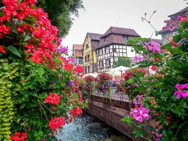 Ngất ngây với những ngôi nhà phủ hoa đầy lối đi - ảnh 8