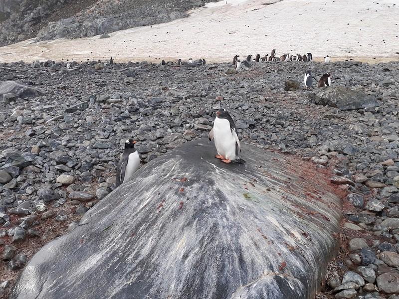 Hành trình chinh phục châu Nam Cực của cô gái Việt - ảnh 5