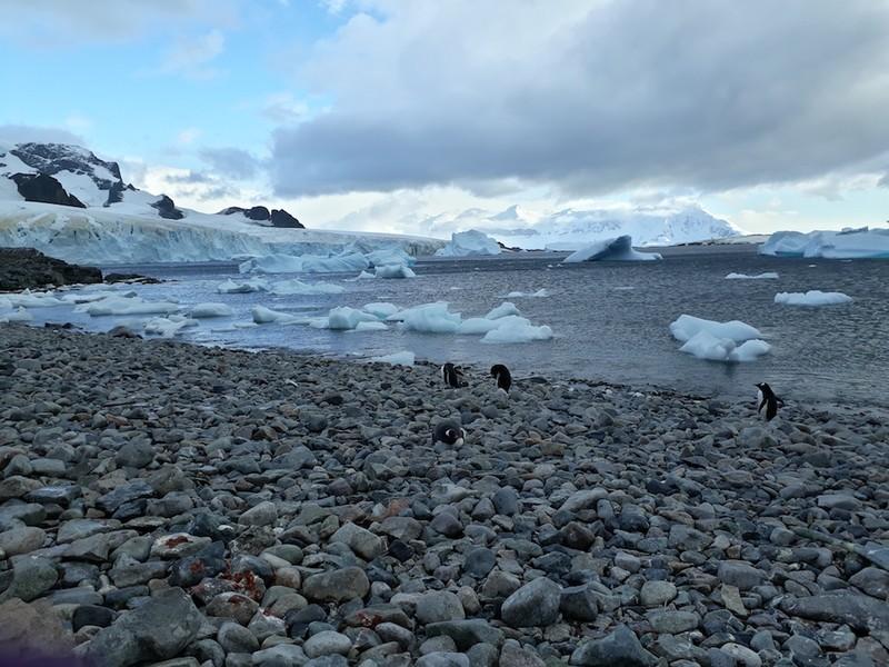 Hành trình chinh phục châu Nam Cực của cô gái Việt - ảnh 16