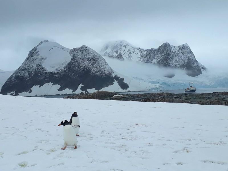 Hành trình chinh phục châu Nam Cực của cô gái Việt - ảnh 4