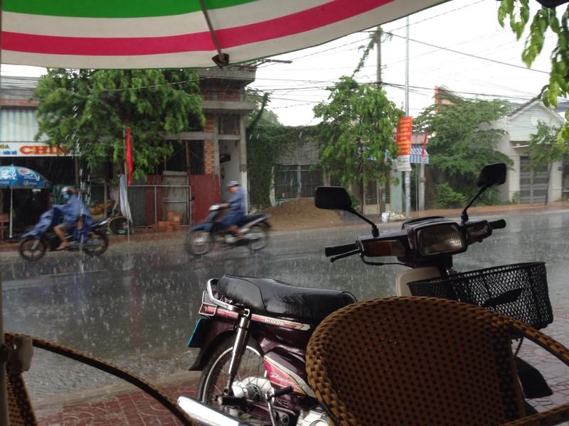 Xuất hiện 'cơn mưa vàng' ở Cần Thơ - ảnh 2