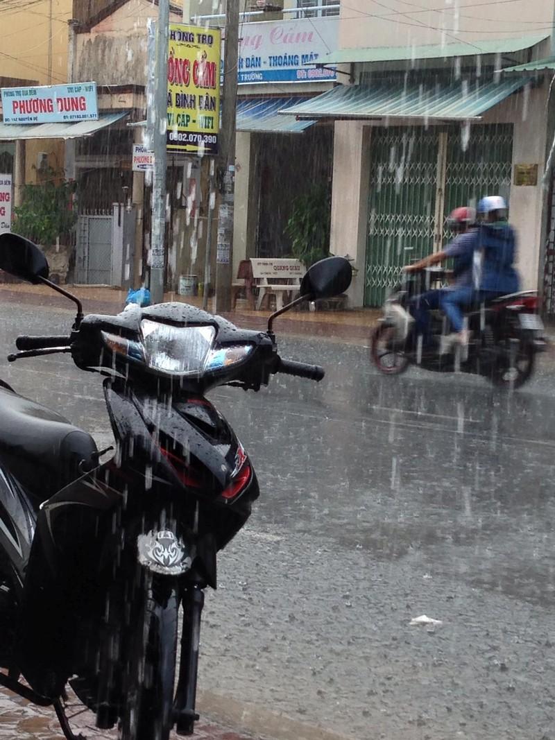 Xuất hiện 'cơn mưa vàng' ở Cần Thơ - ảnh 5