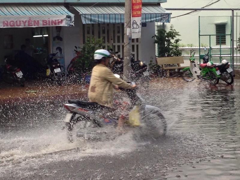 Xuất hiện 'cơn mưa vàng' ở Cần Thơ - ảnh 3