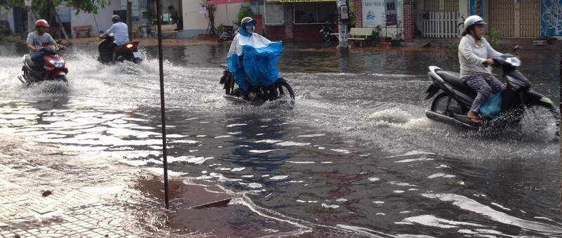 Xuất hiện 'cơn mưa vàng' ở Cần Thơ - ảnh 4