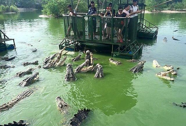 Du khách Trung Quốc điên đảo với dịch vụ câu cá giữa 4.000 con cá sấu - ảnh 1