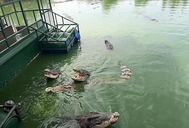 Du khách Trung Quốc điên đảo với dịch vụ câu cá giữa 4.000 con cá sấu - ảnh 3