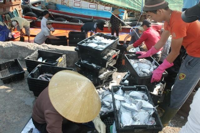Gần 100 tấn cá chết trôi dạt vào bờ các tỉnh miền Trung - ảnh 1
