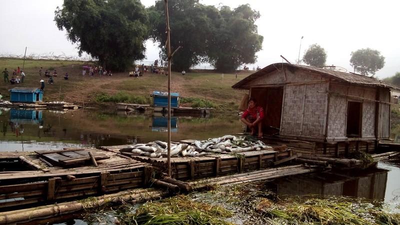 Thanh Hóa: Cá chết trắng bụng hàng chục tấn, dân chỉ biết khóc  - ảnh 3