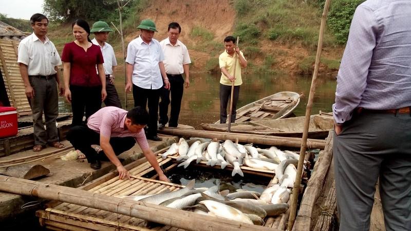 Thanh Hóa: Cá chết trắng bụng hàng chục tấn, dân chỉ biết khóc  - ảnh 4