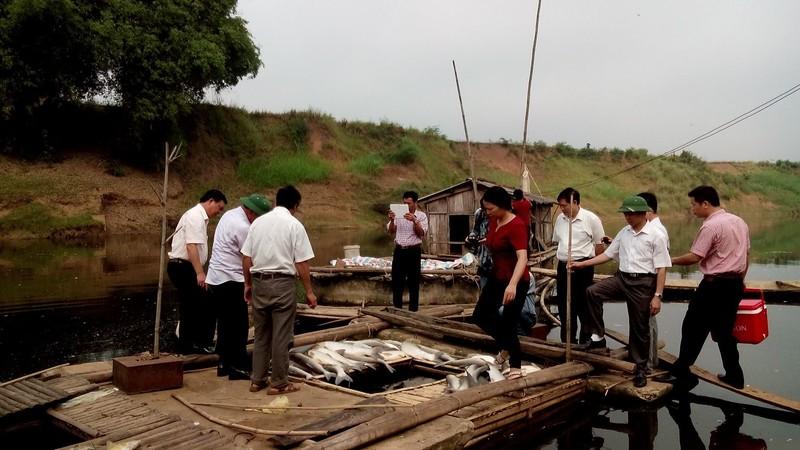 Báo cáo Thủ tướng vụ cá chết trắng ở Thanh Hóa - ảnh 2