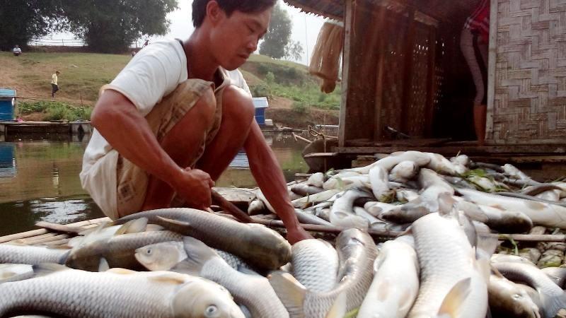 Cá chết trên sông Bưởi vì ô nhiễm môi trường quá nặng - ảnh 1