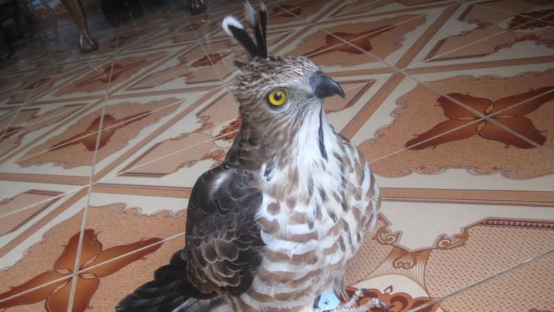 Thanh niên khoe giết khỉ bị điều tra vì nuôi nhốt chim cắt - ảnh 2