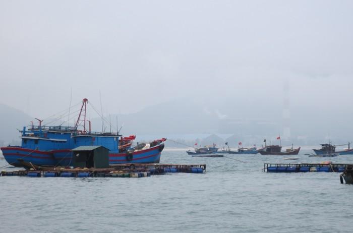 Ngư dân chờ công bố nguyên nhân cá chết mới ra khơi - ảnh 1