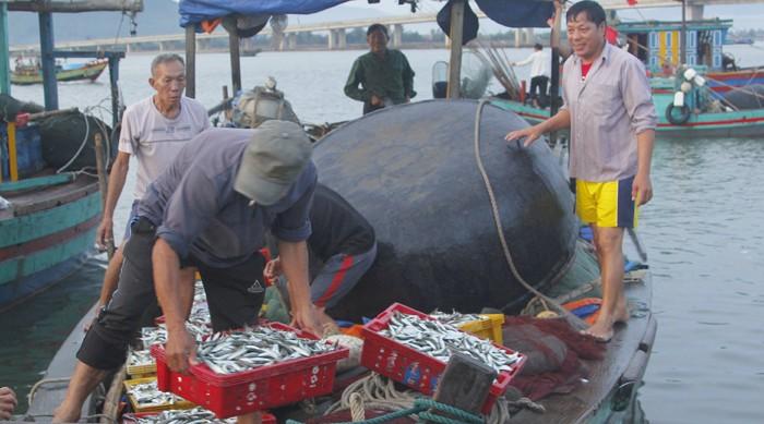 Chủ tịch tỉnh Hà Tĩnh thị sát cảng cá, động viên ngư dân  - ảnh 1