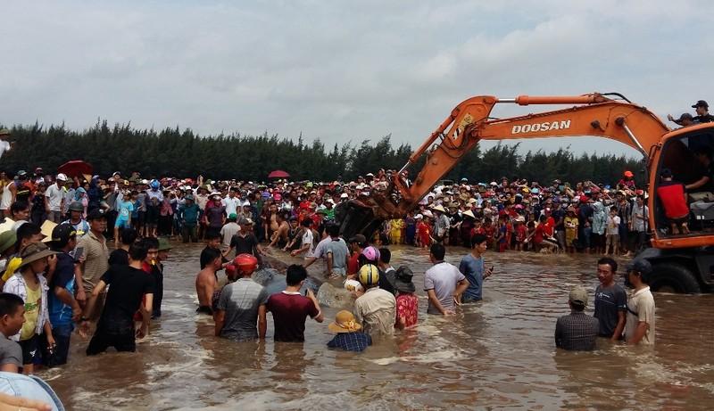 Hàng ngàn người dân hợp sức đưa cá voi về với biển - ảnh 3
